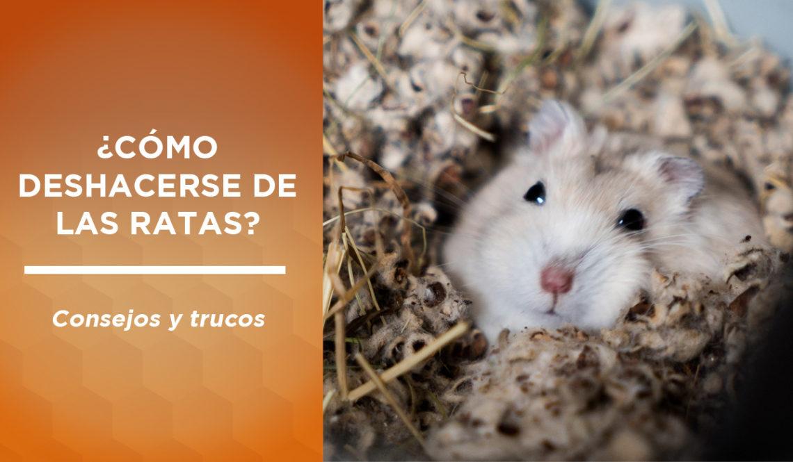 deshacerse ratas